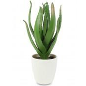 Ozdoba Aloes