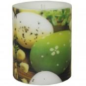 Pl Lampion Eggs Among Catkins